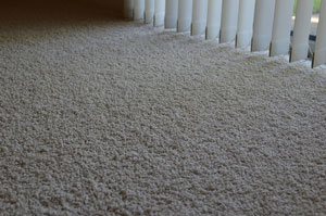 Professionally Cleaned Carpet