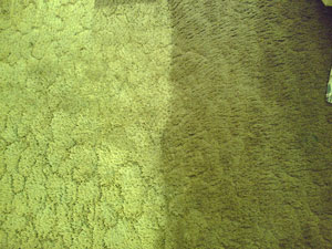 Difference of Steam Cleaned Carpet